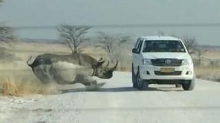 Ρινόκερος επιτίθεται σε τζιπ με τουρίστες
