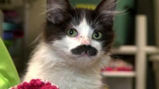 Μία γάτα... με μουστάκι!