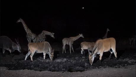 Will Burrard Lucas: O paparazzi του ζωικού βασιλείου