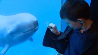 Φάλαινα δολοφόνος αποκτά νέο φίλο