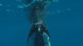 Κολυμπώντας με τα μεγαλύτερα θηλαστικά του πλανήτη…