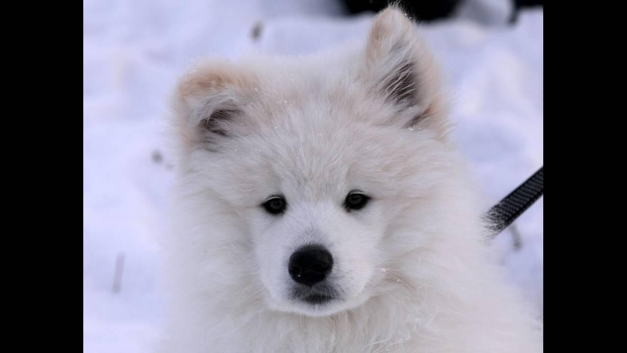 https://cdn.cnngreece.gr/media/news/2016/03/08/24457/photos/snapshot/RUSSIA-ANIMALS10.jpg
