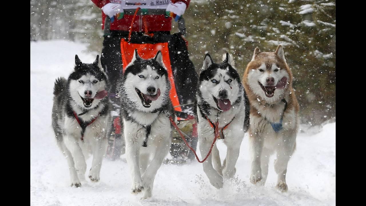 https://cdn.cnngreece.gr/media/news/2016/03/08/24457/photos/snapshot/RUSSIA-ANIMALS3.jpg