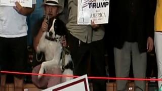 Ο... αντικομφορμιστής σκύλος που αψήφησε στον Ντόναλντ Τραμπ!