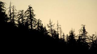 Το αρχαιότερο απολίθωμα πεύκου βρέθηκε στον Καναδά