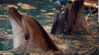Η νέα ρωσική ταξιαρχία αποτελείται από δελφίνια