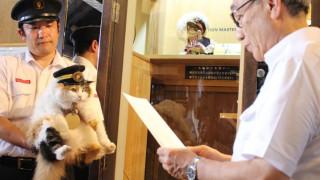Πάνω από 3.000 άτομα στην κηδεία της διασημότερης γάτας στην Ιαπωνία! (pics&vid)