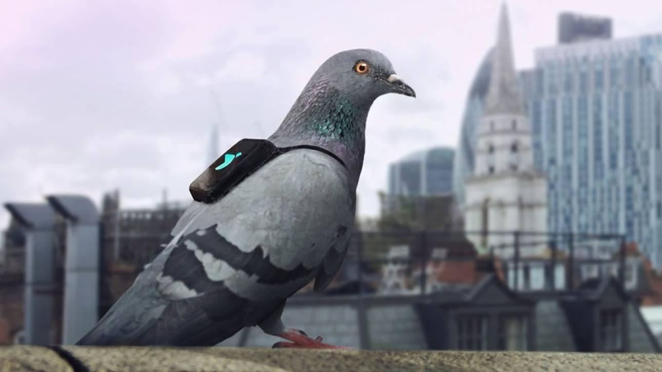 Περιστέρια «φύλακες» της ατμόσφαιρας του Λονδίνου