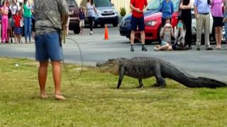 Φιλομαθής αλιγάτορας αναστατώνει σχολείο της Φλόριντα