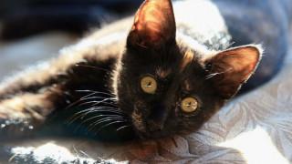 Μπριζίτ, η γάτα που κλέβει ανδρικά εσώρουχα και κάλτσες (pic)