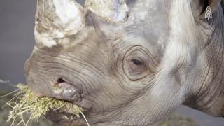 Αυτό είναι το πιο σπάνιο είδος ρινόκερου