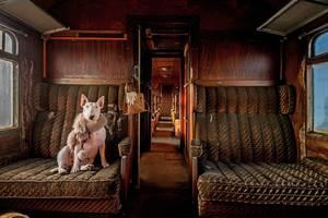 Κατηγορία Readers Choice: Orient Express της Alice Van Kempen από την Ολλανδία