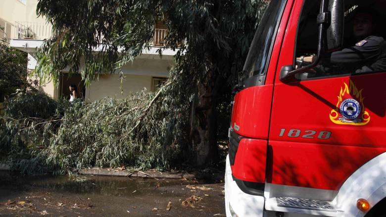Χανιά: 64χρονος οδηγός καταπλακώθηκε από δέντρο και σκοτώθηκε