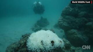 Τα κοράλλια πεθαίνουν στο Μεγάλο Κοραλλιογενή Ύφαλο