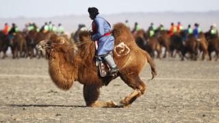Αγώνας δρόμου με καμήλες στη Μογγολία