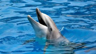 Τα δελφίνια το νέο κρυφό όπλο του ναυτικού των ΗΠΑ