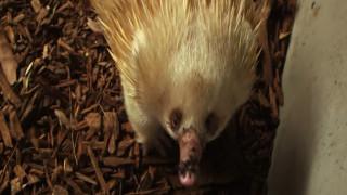 Το ζωικό βασίλειο της Αυστραλίας και οι... αλλόκοτοι «εκπρόσωποί» του