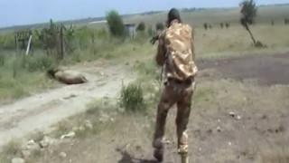 Βίντεο: Πυροβολούν και σκοτώνουν λιοντάρι που επιτέθηκε σε άνδρα