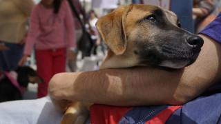Παγκόσμια Ημέρα Αδέσποτων Ζώων: μια γιορτή υιοθεσίας στην Αθήνα