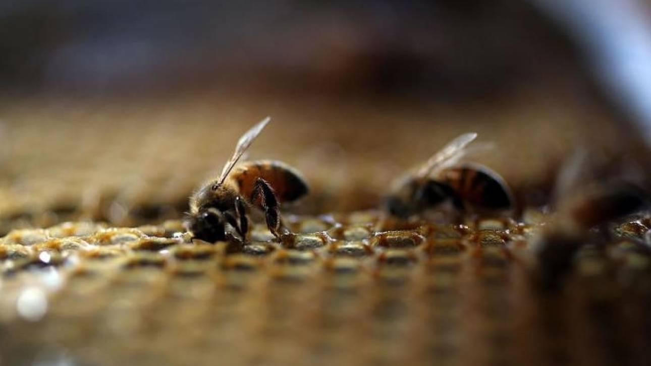 Επίθεση 20.000 μελισσών σε τέμενος της Αριζόνα
