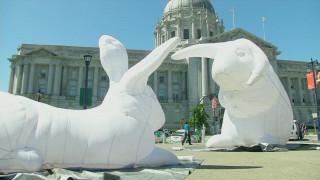 Γιγάντια κουνέλια κατέκλυσαν το Σαν Φρανσίσκο