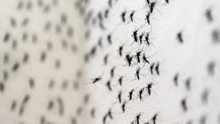 Ιατρικός Σύλλογος Πειραιά: Κίνδυνος εμφάνισης ελονοσίας