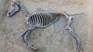 Εντυπωσιακά νέα ευρήματα από την ομαδική ταφή στο Φαληρικό Δέλτα