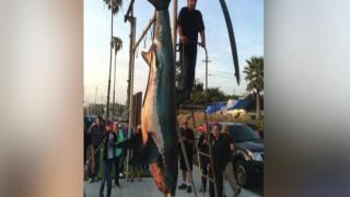 Θηριώδης καρχαρίας – αλωπίας πιάστηκε στην Καλιφόρνια