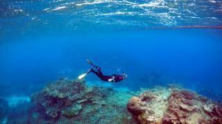 Ο Μεγάλος Κοραλλιογενής Ύφαλος έχασε το χρώμα του