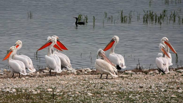 Η επαναδημιουργία της λίμνης Κάρλα