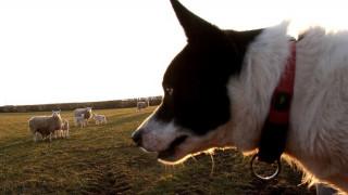 Σκύλος διήνυσε 400 χλμ σε 12 μέρες για να επιστρέψει στην οικογένειά του