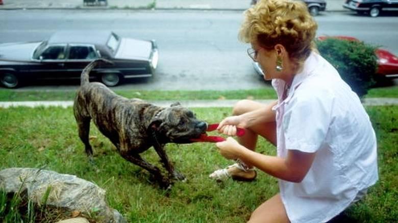 Συνέλαβαν 23χρονη ιδιοκτήτρια πιτ μπουλ - O σκύλος δάγκωσε στο πόδι 30χρονη