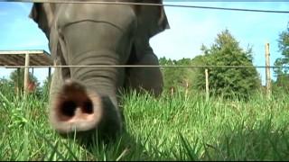 Τσίρκο ρίχνει αυλαία στις παραστάσεις με ελέφαντες