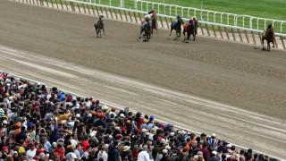 Εφαρμογή προβλέπει με ακρίβεια τους νικητές σε ιπποδρομίες και ποδοσφαιρικούς αγώνες