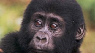 Τα 10 είδη ζώων που απειλούνται με εξαφάνιση (pics)
