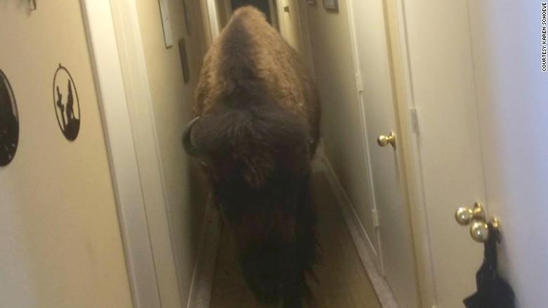 160515135716 02 bison for sale exlarge 169