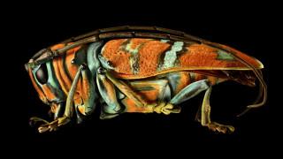Ο κόσμος των εντόμων αποκαλύπτεται σε εντυπωσιακή φωτογραφική έκθεση