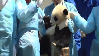 Ένα κέντρο panda καλωσορίζει τα νέα μέλη του!