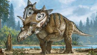 Νέο είδος δεινοσαύρου βρέθηκε… «κατά λάθος»