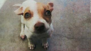 Σκύλος βρέθηκε θετικός σε... χρήση ηρωίνης και μεθαμφεταμίνης