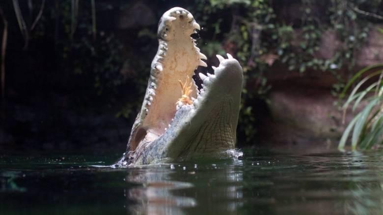 Τρεις επικίνδυνοι κροκόδειλοι του Νείλου βρέθηκαν στη Φλόριντα