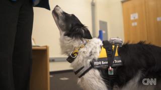 Μαθαίνοντας στα σκυλιά να μιλάνε