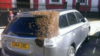 «Στρατός» από μέλισσες κυνηγά αυτοκίνητο για να απελευθερώσει τη βασίλισσά του