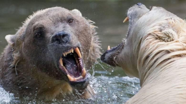 Ανακαλύφθηκε νέος είδος αρκούδας