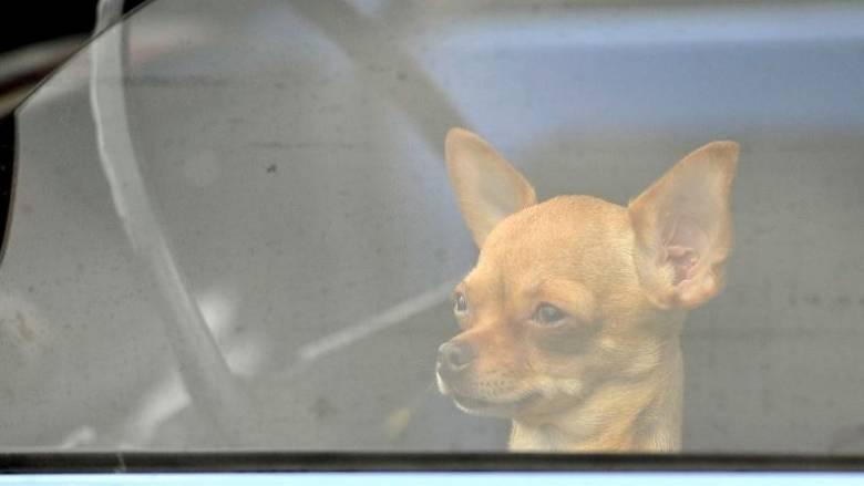 Άφησαν σκύλο μέσα σε αυτοκίνητο με κλειστά παράθυρα και το πιο περίεργο σημείωμα (pic)