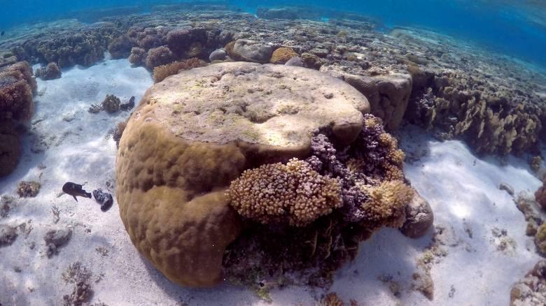 SOS εκπέμπει ο μεγάλος κοραλλιογενής ύφαλος της Αυστραλίας
