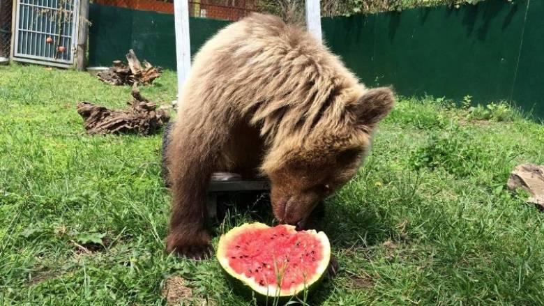 Αρκουδάκι του Αρκτούρου με ειδικές ανάγκες έχει το δικό του αναπηρικό καρότσι (pics)