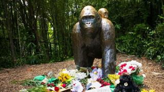 Ο Χαράμπε και πέντε συγκλονιστικά περιστατικά σε ζωολογικούς κήπους (pics)
