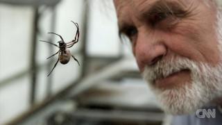 «Ξεκλείδωσαν» τα μυστικά του ιστού της αράχνης