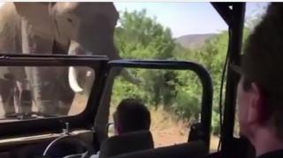 Ελέφαντας επιτέθηκε στον Άρνολντ Σβαρτσενέγκερ (vid)